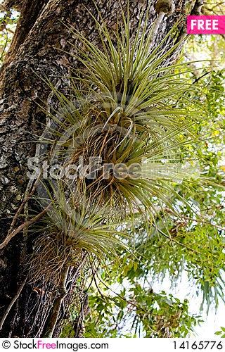 Free Mangrove Tree Royalty Free Stock Image - 14165776