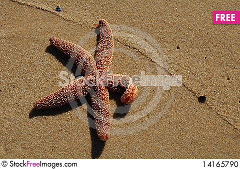 Free Starfish In Sand With Sea Foam Line Stock Photo - 14165790