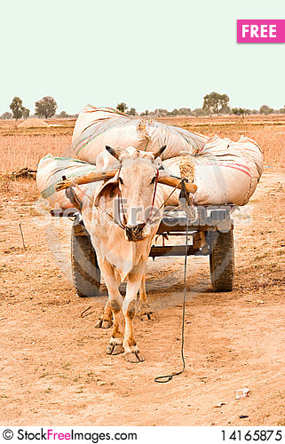 Free Bull Cart Carrying Waste Royalty Free Stock Photo - 14165875