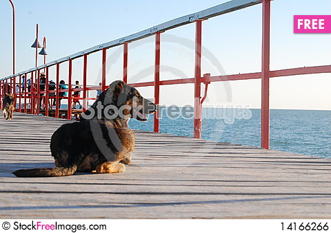 Free Dog On A Pier. Royalty Free Stock Image - 14166266