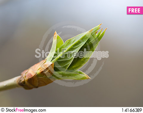 Free Spring Sprout Royalty Free Stock Images - 14166389