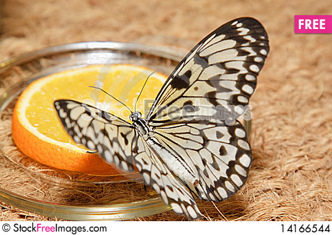 Free Butterfly Stock Images - 14166544