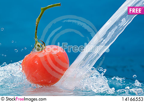 Free Tomato Stock Photos - 14166553