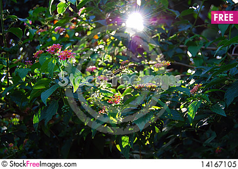 Free Sunny Morning In The Garden Royalty Free Stock Photo - 14167105