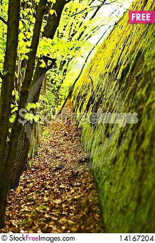 Free Wild Plant Stock Images - 14167204