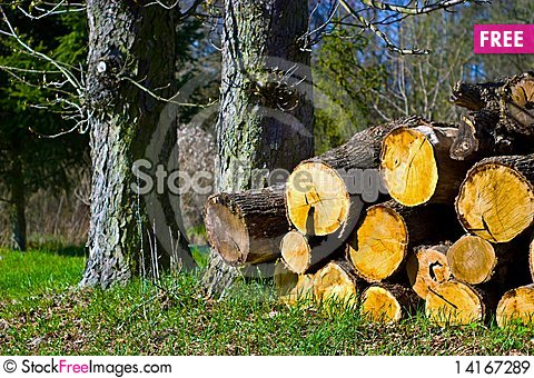 Free Wood Royalty Free Stock Images - 14167289
