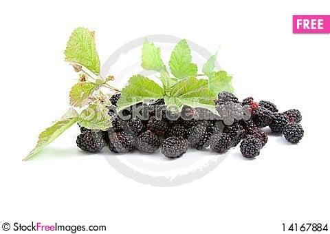 Free Blackberries Stock Images - 14167884