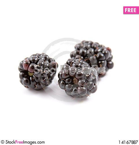 Free Blackberries Royalty Free Stock Photography - 14167887