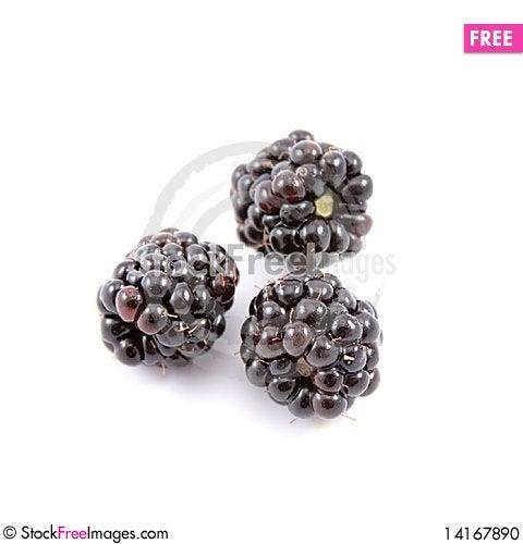 Free Blackberries Stock Photo - 14167890