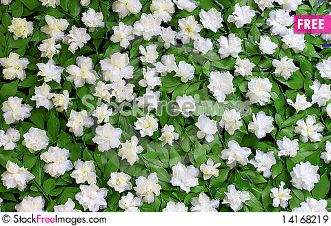 Free White Flowers On A Green Royalty Free Stock Images - 14168219