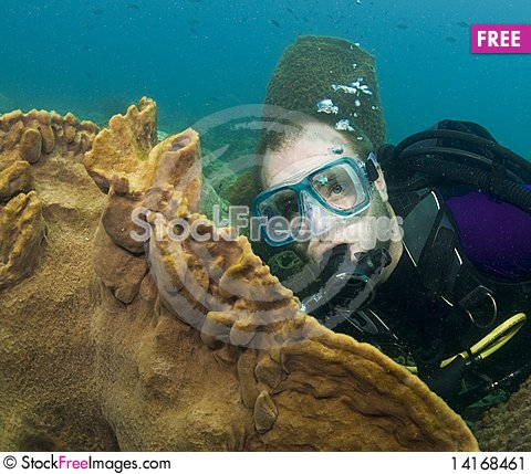 Free Scuba Diver With Coral Stock Image - 14168461
