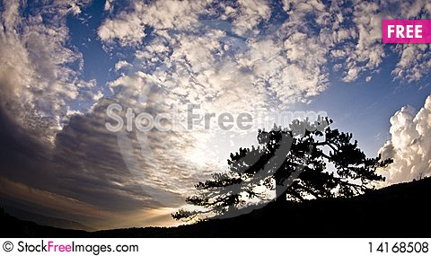 Free Sunset Over Trees Royalty Free Stock Photos - 14168508