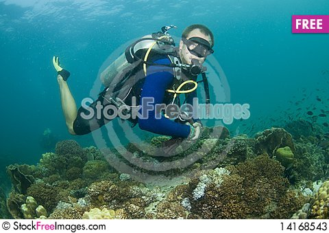 Free Scuba Diver Swimming Over Reef Stock Photos - 14168543