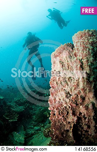 Free Divers Silouetted And Coral Royalty Free Stock Image - 14168556