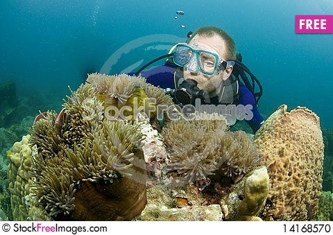 Free Scuba Diver Looking At Enemone Fish Stock Photo - 14168570