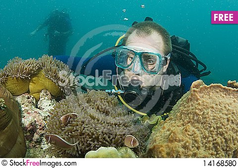 Free Scuba Diver Looking At Enemone Fish Stock Photo - 14168580