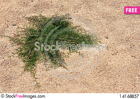Free Grass On The Sand Royalty Free Stock Photography - 14168857