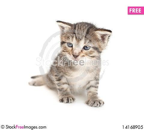 Free Little Two Week Kitten Royalty Free Stock Photo - 14168905