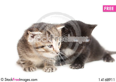 Free Two Little Kittens On White Background Stock Image - 14168911