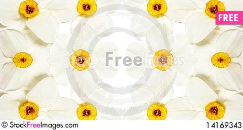 Free Narcissus Stock Photos - 14169343
