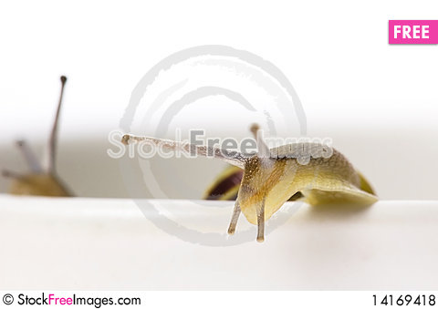 Free Snails. Slow Love Royalty Free Stock Photos - 14169418