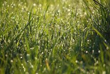 Free Dew On The Grass Stock Images - 14160044