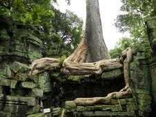 Free Big Tree Stock Images - 14160244