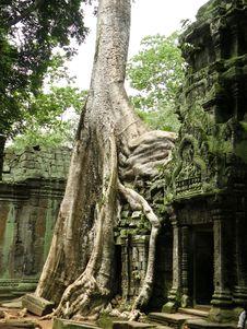 Free Big Tree Stock Photo - 14160290