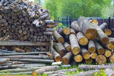 Free Kindling Wood Royalty Free Stock Images - 14160689