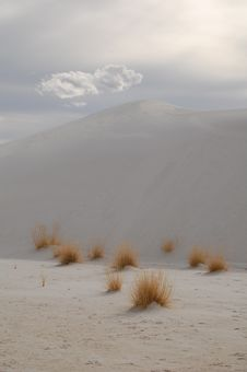 White Sands And Vegetation Stock Images