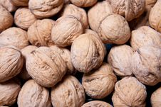 Free Walnuts Royalty Free Stock Photo - 14160945