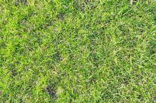 Free Green Lawn Stock Photo - 14161510