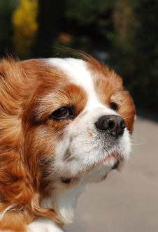 Free Window Dog Stock Photo - 14161780