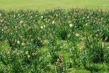 Free Green Fields Stock Photo - 14161960