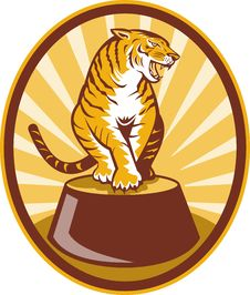 Angry Tiger Sitting On Top Of Plinth Stock Images