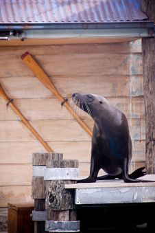 Free Seal Show . Stock Photography - 14163032