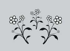 Floral Elements Royalty Free Stock Photo