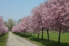 Free Countryroad In Spring Stock Photo - 14163740