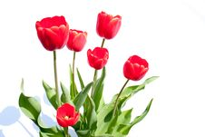 Free Bouquet Of Red Tulips Stock Photography - 14164682
