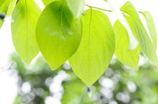 Green Fresh Leaves Stock Images