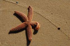 Free Starfish In Sand With Sea Foam Line Stock Photo - 14165790