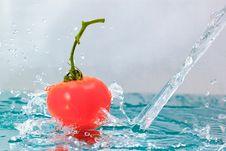Free Tomato Stock Photo - 14166510