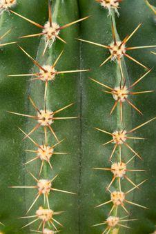 Free Cactus Texture Stock Image - 14166701