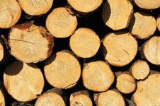 Free Pile Of Wooden Logs Stock Photography - 14167212
