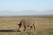 Free Rhinoceros Grazing In A Field Stock Photography - 14167412