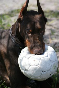 Free Dog Stock Photography - 14167952