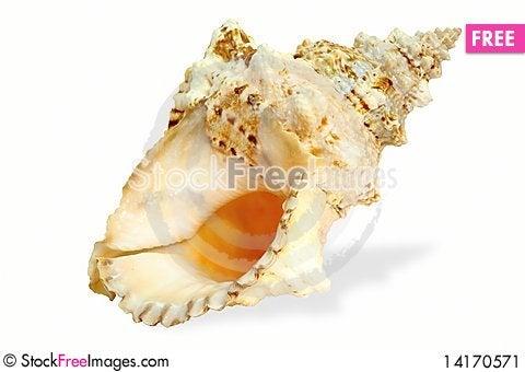 Free Seashell Stock Image - 14170571