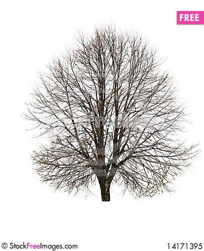Free Tree Royalty Free Stock Photo - 14171395