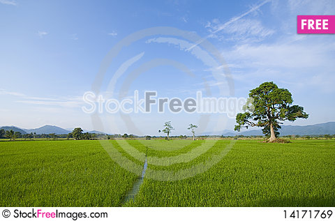 Free Padi Field LAndscape Royalty Free Stock Images - 14171769