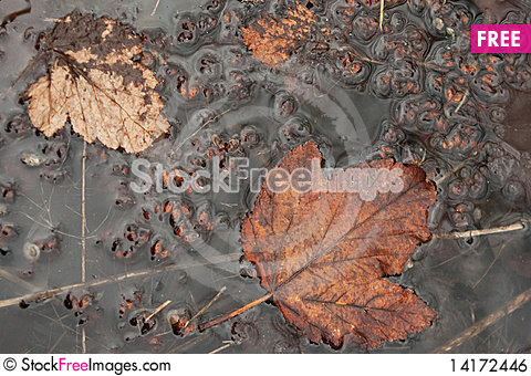 Free Leaves Royalty Free Stock Image - 14172446